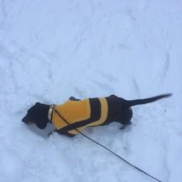 Погуляла с собакой