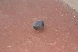 Кормлю птичку